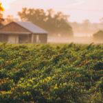 Эйвери Айлэнд, штат Луизиана, место производства соусов Тобаско