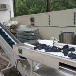сборка и переработка обработка винограда механизированный процецц виноградарство виноделие техника травалатор урожай лоза
