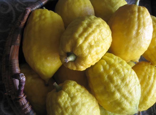 семейство лимонов гайд гид по цитрусовым фруктам