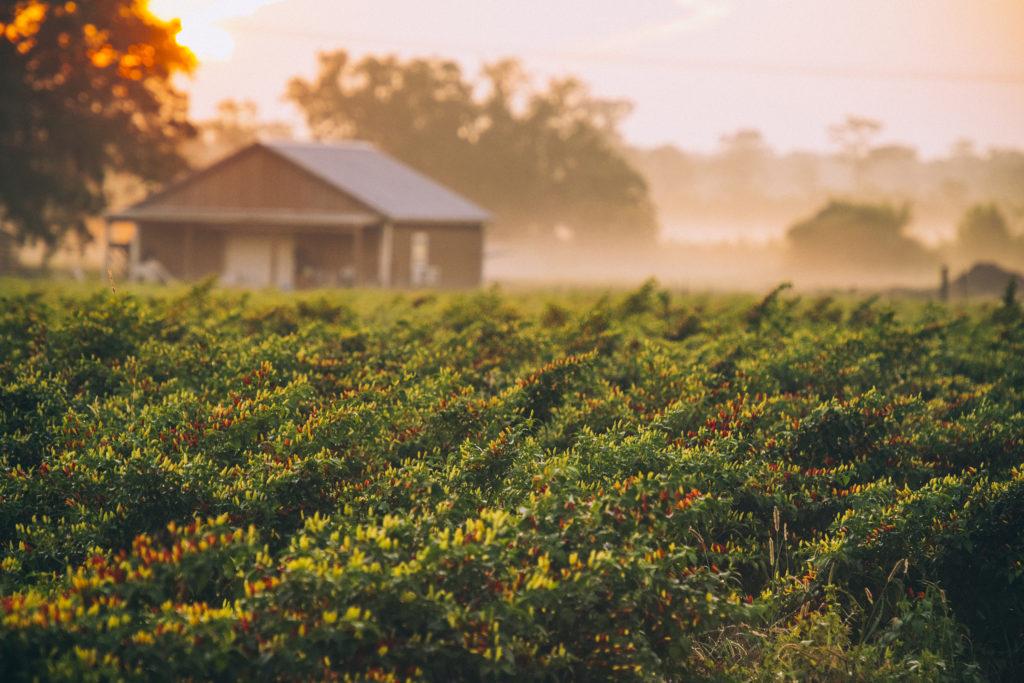 Эйвери Айлэнд, штат Луизиана, место производства соусов Табаско