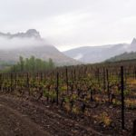 Краснодарское вино региона Собер-Баш виноградники