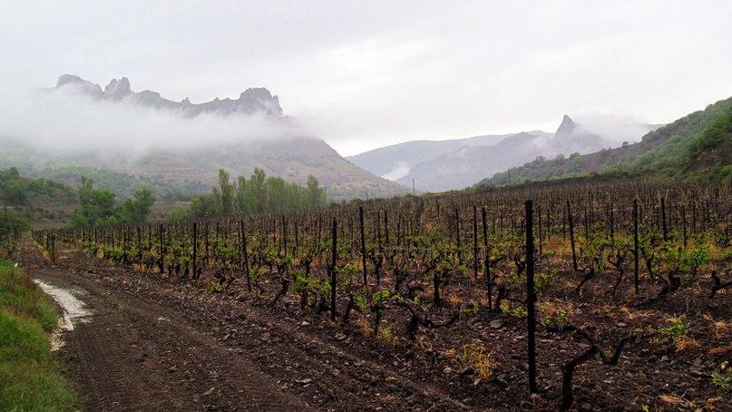 Краснодарское вино региона Собер-Баш виноградники , вина Собер Баш